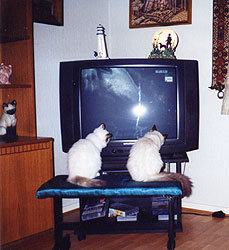 Tv with cats